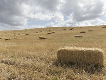 Straw bale. Be collected right after harves Royalty Free Stock Photo