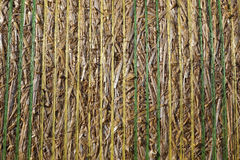 Straw bale close up Stock Images