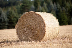 Straw bale on cornfield harvest in summer Stock Image