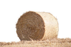 Straw bale on cornfield isolated without background Stock Photo