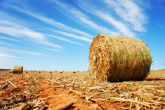 Straw bale on a farm. Land Royalty Free Stock Photo