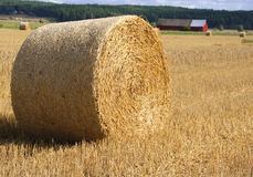 Straw Bale In Field Royalty Free Stock Photos