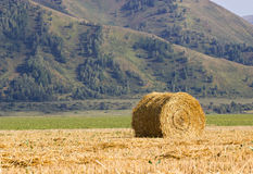 The straw bale in the field Stock Photography