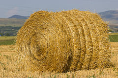 The straw bale in the field Stock Images