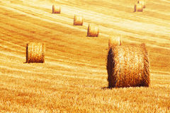 Straw bale Stock Image