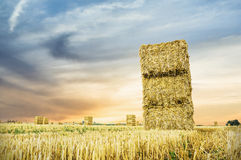 Straw bale on field in sunset light, landscape Stock Image