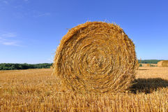 Straw bale in a fiels. Front of a straw bale in a field under blue sky Royalty Free Stock Image