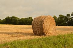 Round hay bale in field. Round hay bale in rural field on sunny day Royalty Free Stock Images