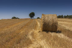 Straw bale on a harvested wheat field Stock Photos