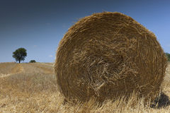 Straw bale on a harvested wheat field Stock Image