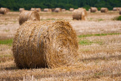 Straw bale / hey stack. On golden sunny day stock photography