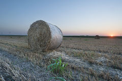 Straw bale / hay stack on golden sunny day with clear sky Stock Images