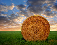 Straw bale. In a lush green field in the sunset Stock Images