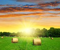 Straw bale in a lush green field Stock Images
