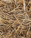 Straw Bale Texture Stock Image