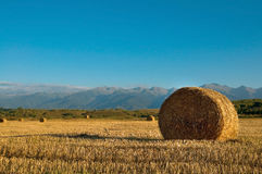 Straw bale wheat field Stock Images