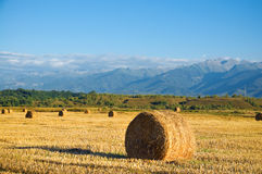 Straw bale wheat field Stock Photography