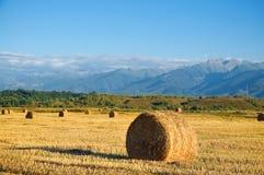 Straw bale wheat field Stock Photography