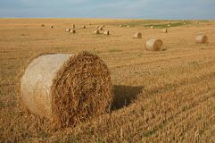 Straw bales 1. Group of round straw bales on the field Royalty Free Stock Photo