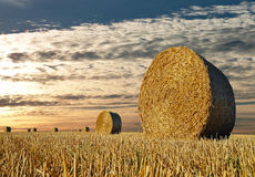 Straw Bales. Under an evening sky royalty free stock photo
