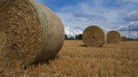Straw bales. On field in row Royalty Free Stock Photo