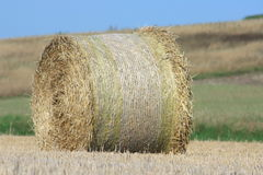 Straw bales. Harvested wheat field, with round bales of straw Royalty Free Stock Photos
