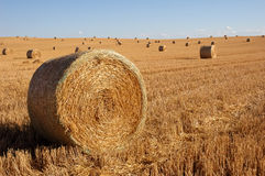 Straw bales. In a beautiful sunny day royalty free stock photos