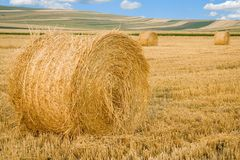 Straw bales. Landcape after reaping royalty free stock images