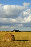 Straw bales. In flied of wheat        against blue sky Stock Image