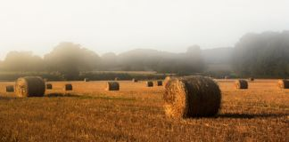 Straw bales. In misty morning sunshine stock photo