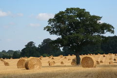 Straw Bales 4. Round Straw bales in a field with Lone tree stock image