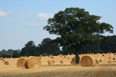 Straw Bales 4 Stock Image