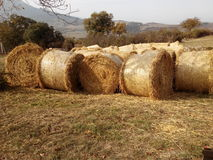 Straw Bales Stockbild