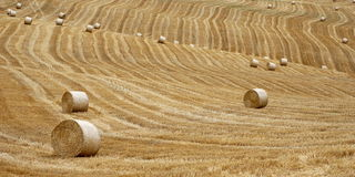 Straw Bales  Stock Photography