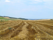 Straw bales in agricultural harvested wheatfield Royalty Free Stock Photos