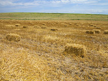 Straw bales in agricultural harvested wheatfield Stock Image