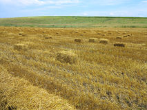 Straw bales in agricultural harvested wheatfield Royalty Free Stock Photography