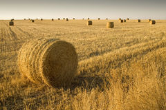 Straw bales al sunset. Field with many straw bales near Teruel (Spain Royalty Free Stock Image