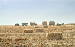 Straw bales in autumn Stock Photo