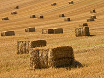 Straw bales background Royalty Free Stock Image