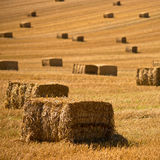 Straw bales background. A farm field in the countryside filled with straw bales royalty free stock photography