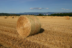Straw bales in corn field Royalty Free Stock Image