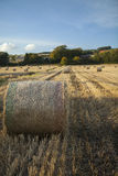 Straw bales in a cornfield Stock Photography