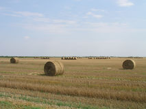 Straw bales in countryside Stock Photo