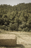 Straw bales in the countryside. Royalty Free Stock Photography