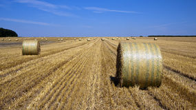 Straw bales in a countryside Royalty Free Stock Image
