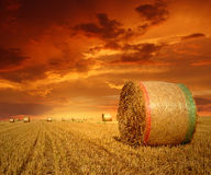 Straw bales on farmland. With red cloudy sky Stock Photos
