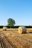 Straw bales on farmland Stock Image
