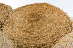 Straw bales on farmland. Bale of straw. Straw bales. Selective focus  Straw bales stacked on the pile Royalty Free Stock Photo