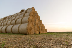Straw bales on farmland. Bale of straw. Straw bales. Selective focus  Straw bales stacked on the pile Stock Image